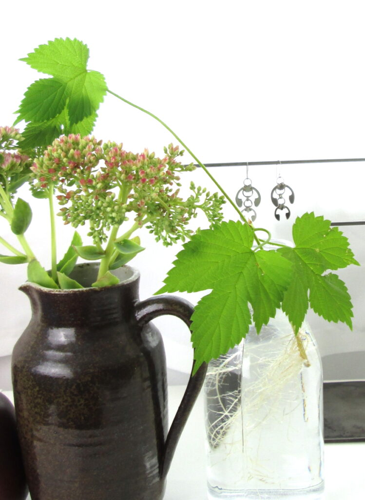 """Sedum 'Autumn Joy"""" and rooting hops vines in vases with Wraptillion's Hops earrings."""
