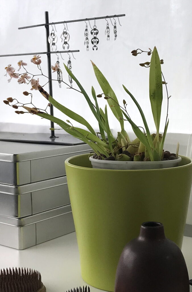 Orchid Oncidium 'Tsuki Marguerite' blooms next to an empty small modern bud vase, a stack of metal boxes, and jewelry from Wraptillion's Delicate Botanicals collection.