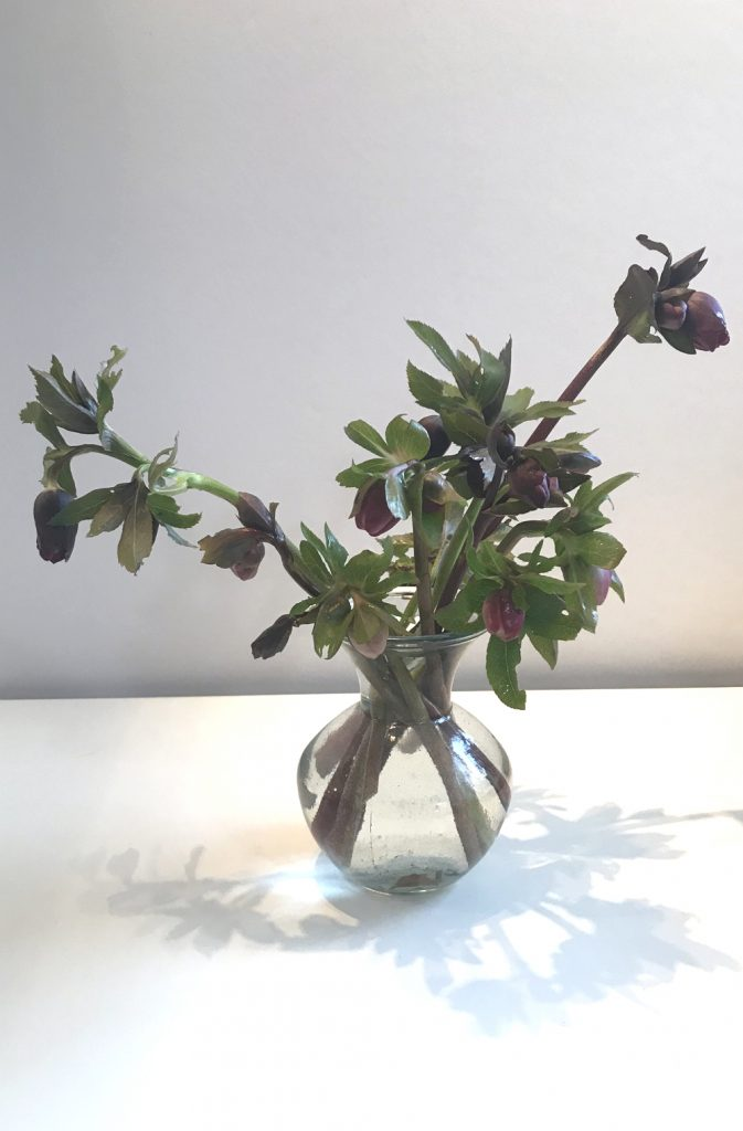 Photo of a small flower arrangement of cut purple hellebores in a glass vase.