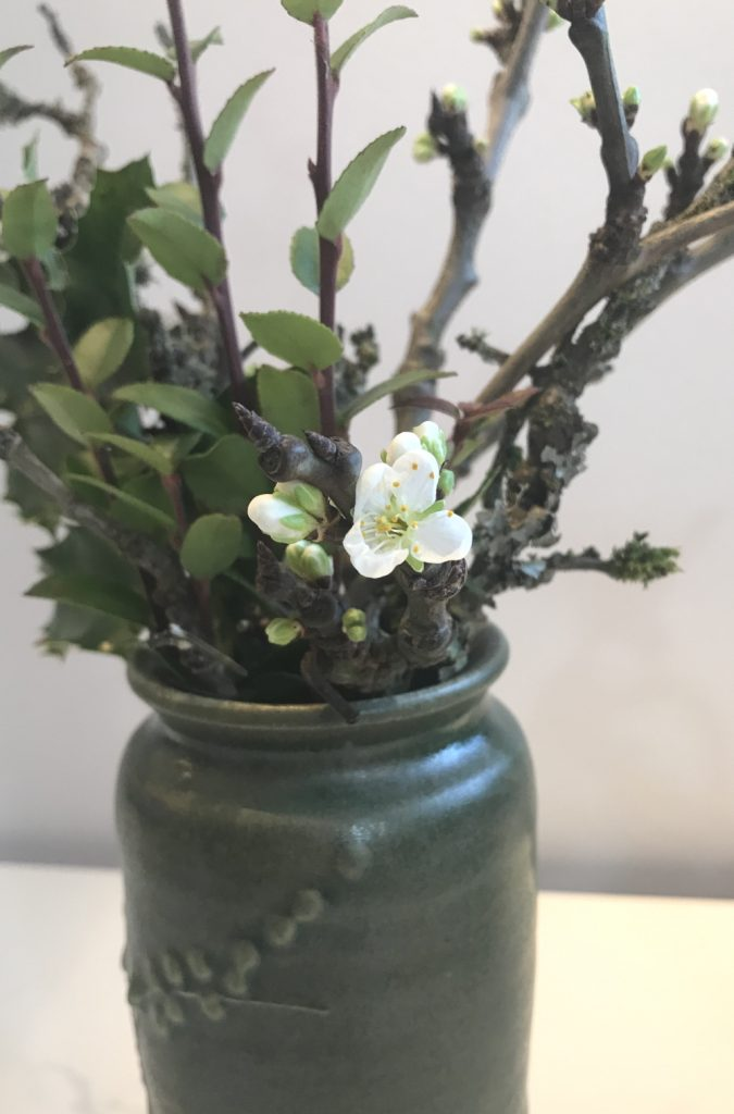 Closeup photo of a small casual winter floral arrangement in a green ceramic vase, with mahonia, evergreen huckleberry, and plum branches breaking into flower.