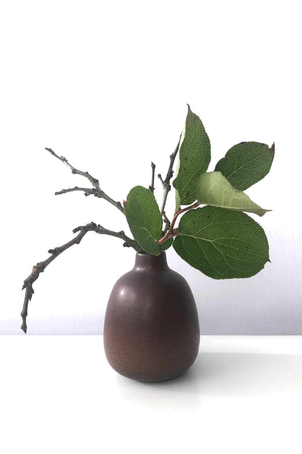 Wraptillion's studio flowers: a small everyday winter flower arrangement of bare plum branches and evergreen salal leaves, in a Heath Ceramics bud vase.