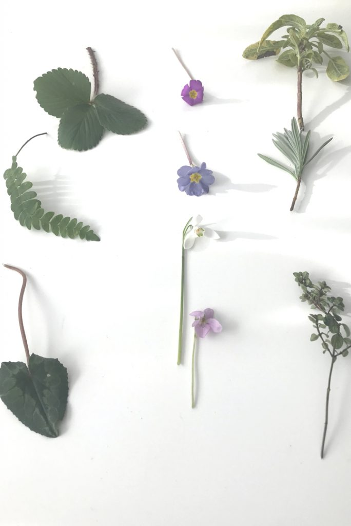 Flatlay of evergreen leaves and early spring flowers: cyclamen, fern, strawberry, primrose, snowdrop, violet, sage, lavender, and thyme.