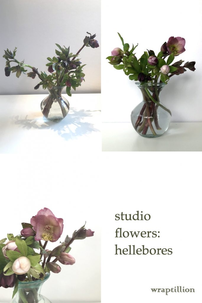 collage of three photos of cut pink and plum hellebores in a glass vase, from bud to bloom; text on image reads: studio flowers: hellebores, wraptillion.