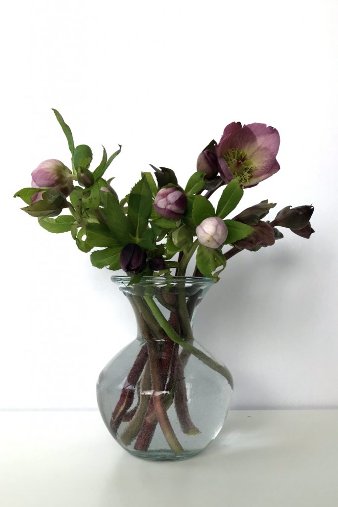 Cut pink hellebores in a glass vase.