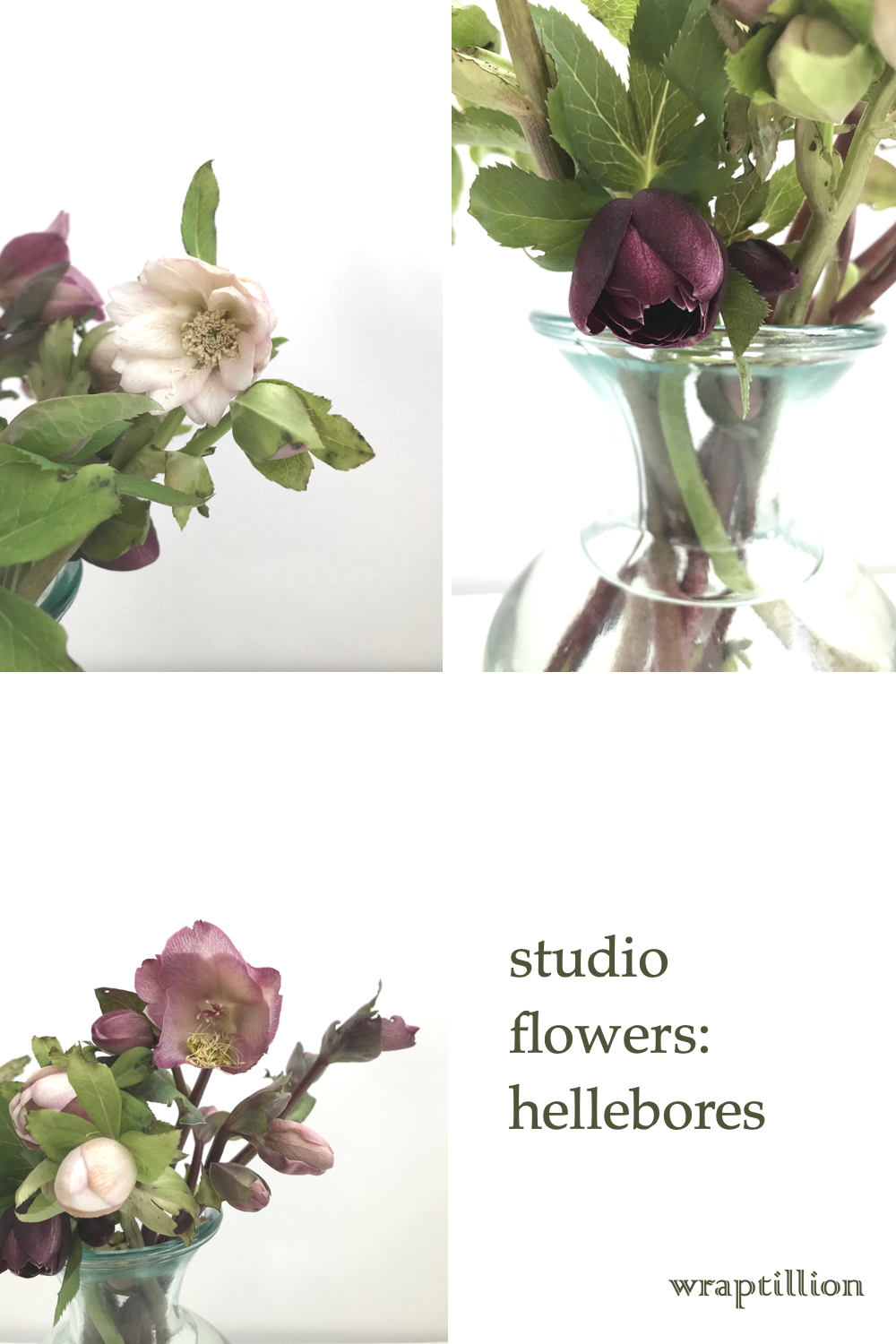 collage of three photos of cut pink and plum hellebores in a glass vase; text on image reads: studio flowers: hellebores, wraptillion.