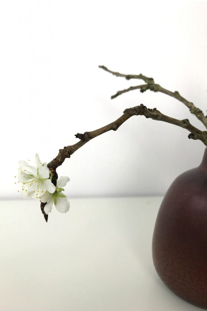 Closeup of a small winter arrangement of flowering plum branches in a small ceramic bud vase.