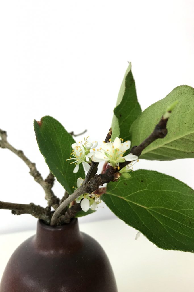 Closeup of a small winter arrangement of flowering plum branches and salal leaves in a small ceramic bud vase.