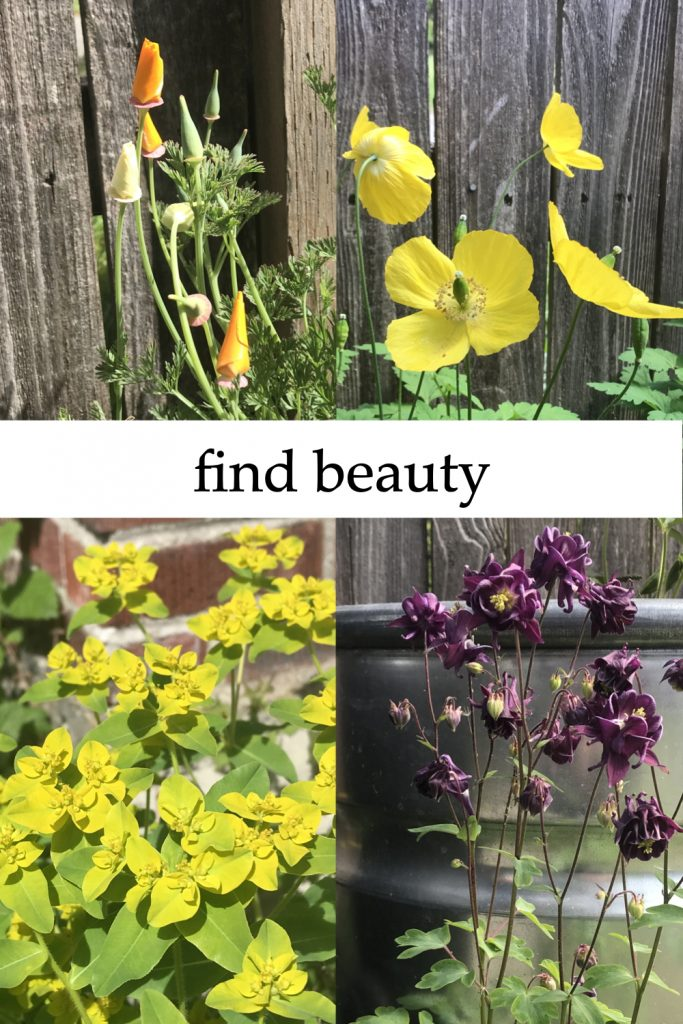 """4 photos compiled together: orange and cream California poppies against a cedar fence; lemon yellow Welsh poppies against a cedar fence; lime green euphorbia against a brick chimney; dark purple columbine against a steel planter. Text on image reads: """"find beauty""""."""