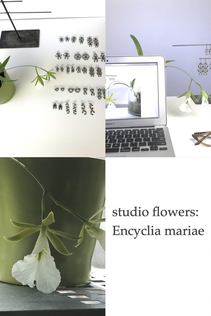 Compiled image featuring orchid Encyclia mariae (formerly Euchile mariae) blooming in Wraptillion's studio. Text on image reads: studio flowers: Encyclia mariae.