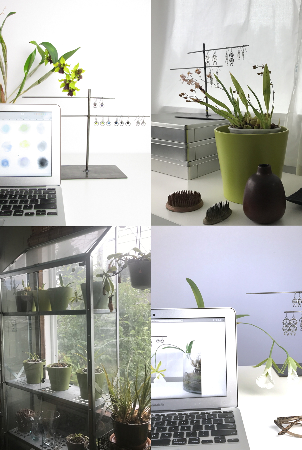 Compiled image of 4 photos featuring Dendrobium 'Green Flash,' Oncidium 'Tsiku Marguerite', and Encyclia mariae in Wraptillion's studio workspace, with indoor plant shelves where the orchids grow.