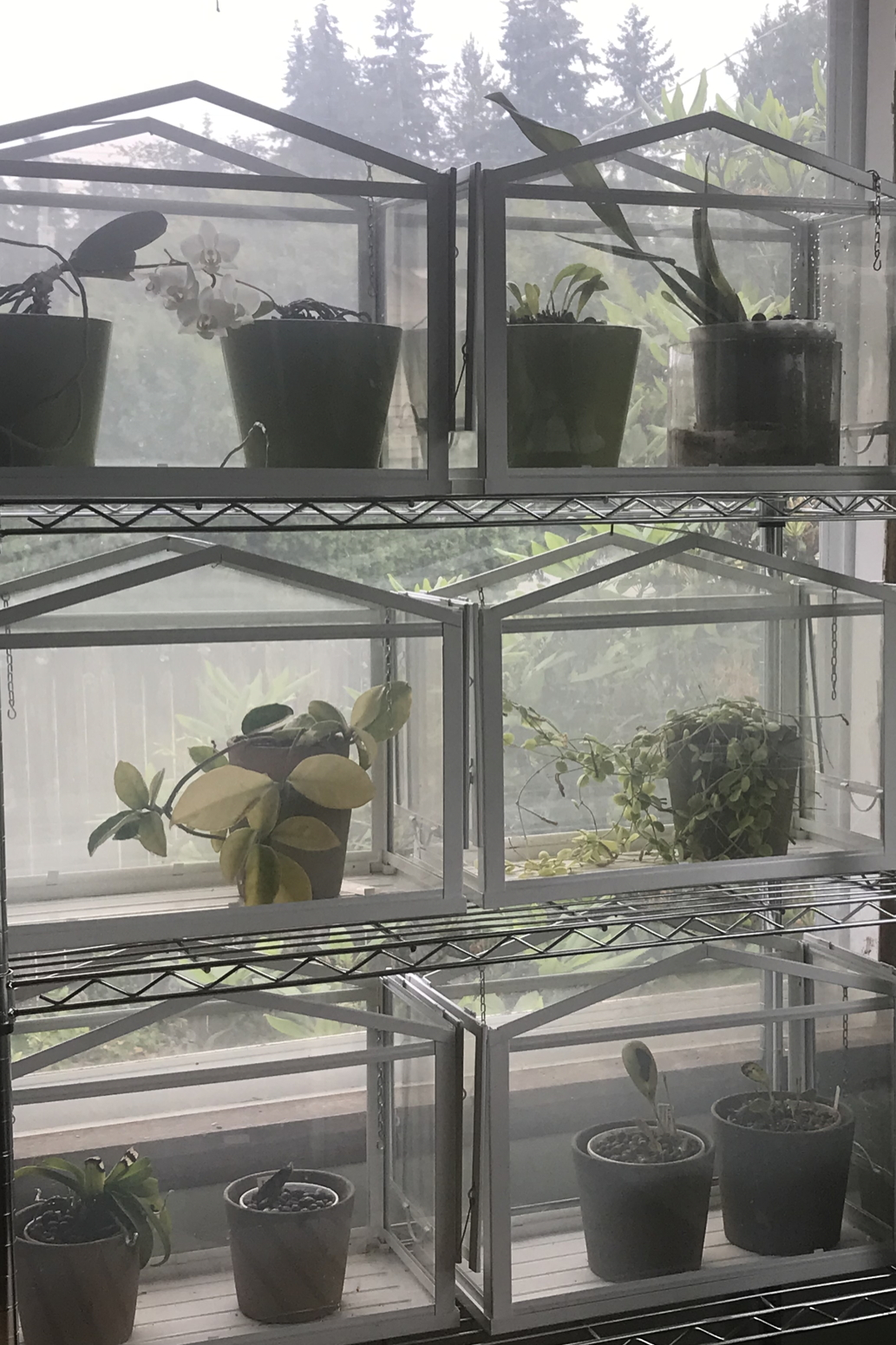 Six small Ikea Socker greenhouses on wire shelves hold orchids and hoyas.